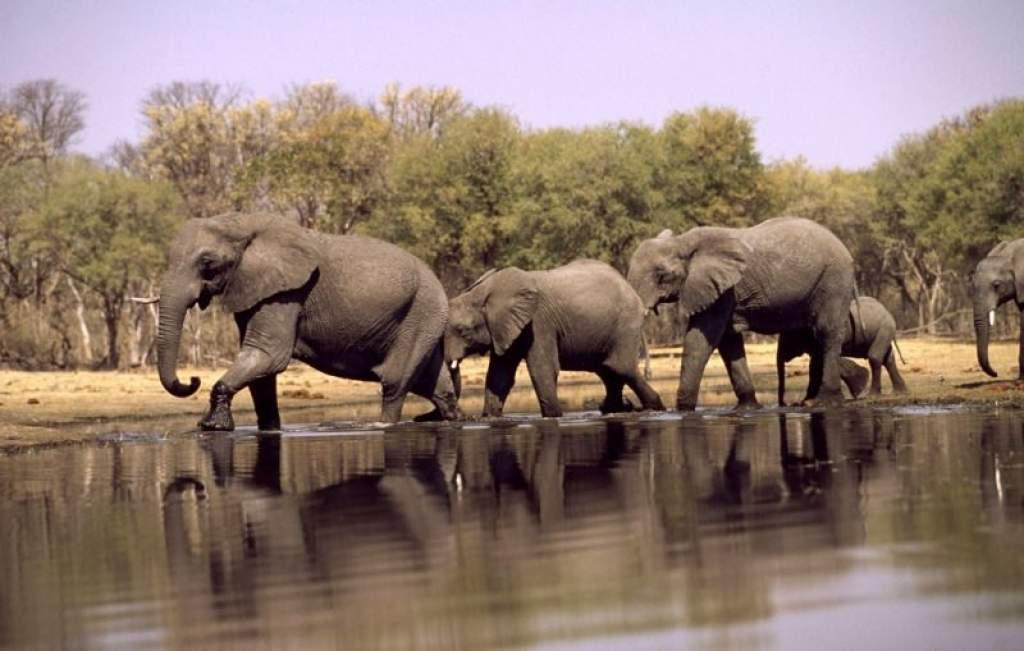Petíció: Egymillió aláírást az elefántokért!