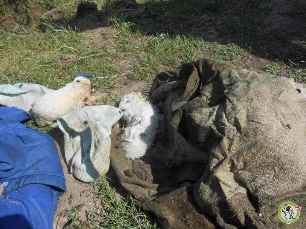 A döglegyek ették a néhány napos kidobott kiskutyákat