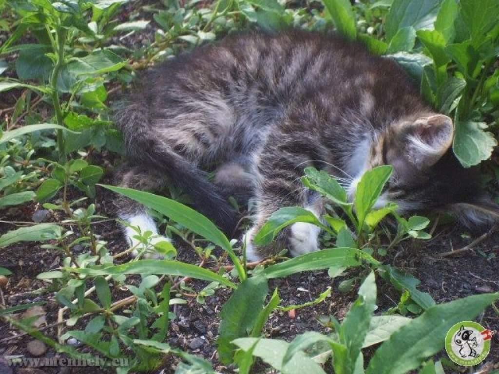 Mérgezett, törött lábú cicákat mentettek az állatvédők
