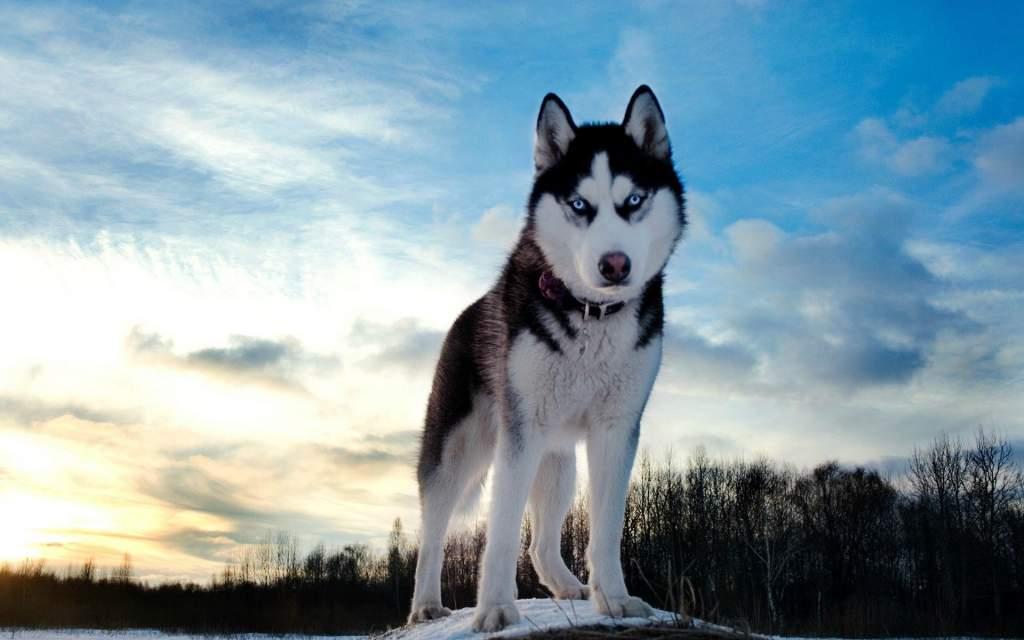 Veszélyes eb! Széchenyivárosiak, kutyatulajdonosok figyelem!